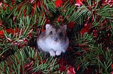Christmas pests