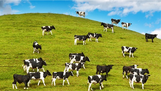 Dairy_Industry