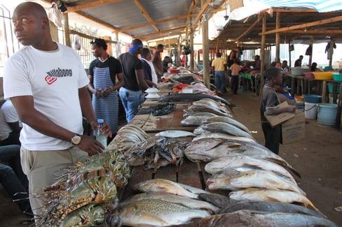 fish_market_third_world.jpg